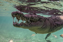 Ever hear the joke about the crocodile going to the dentist? by Morgan Riggs